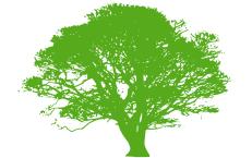 Oshan Trees Inc.